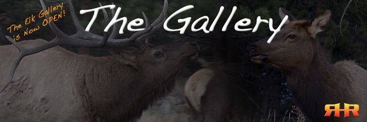 The Gallery - Go beyond the hunting instructional videos and watch elk, deer, and turkey behavior and vocalizations in action!
