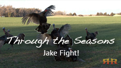Kansas Turkey Hunting - Jake Fight!